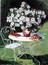Dipladenia blanc sur table de jardin avec livre et chapeau