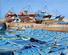 aglomerat de bateaux de pêche à Essaouira, ex-mogador, maroc